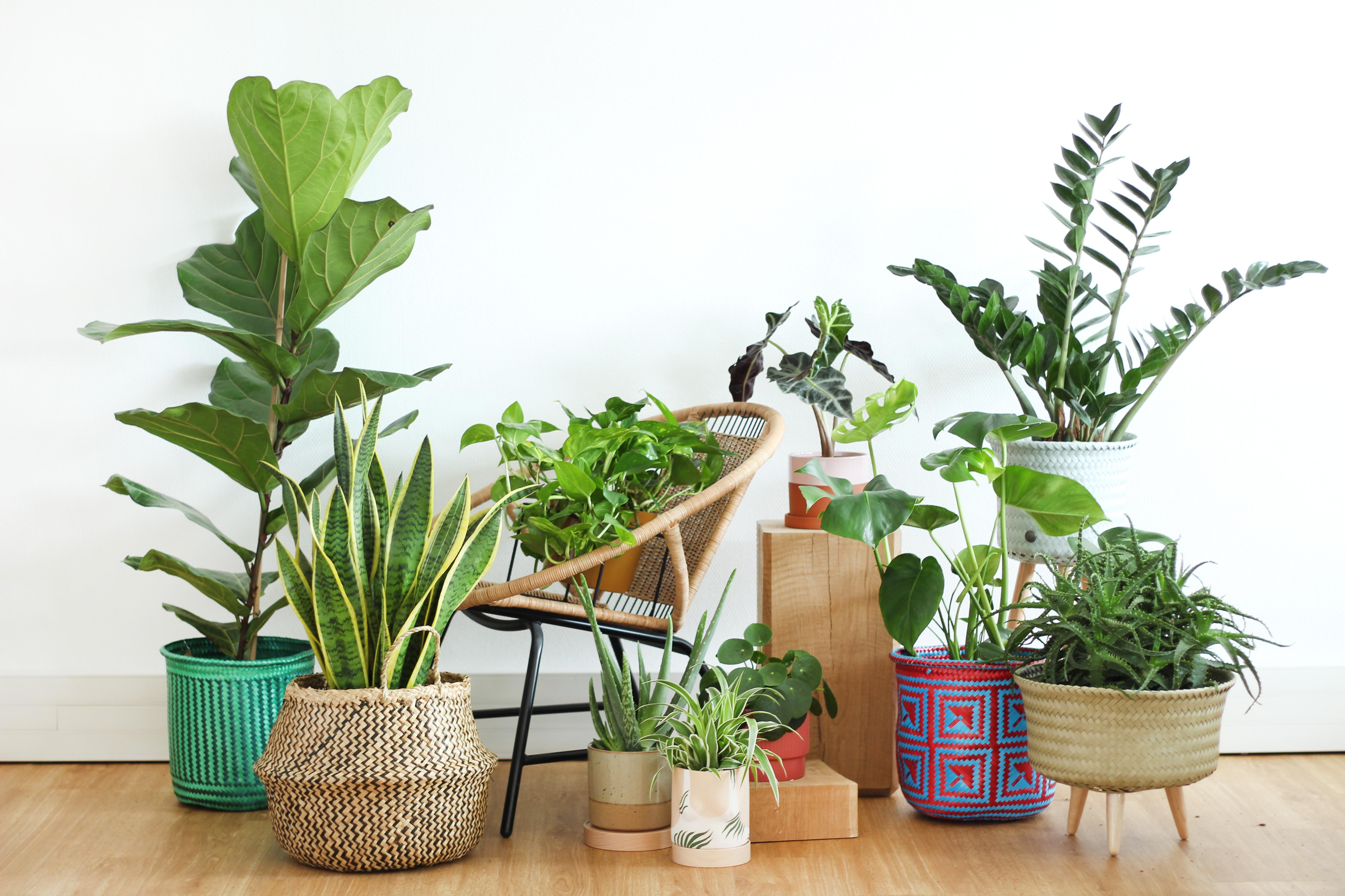 Rempotage:  Astuces pour que votre plante soit bien dans son pot