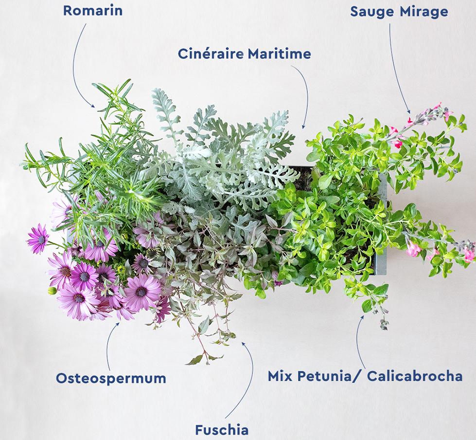 Que planter dans une jardinière ?