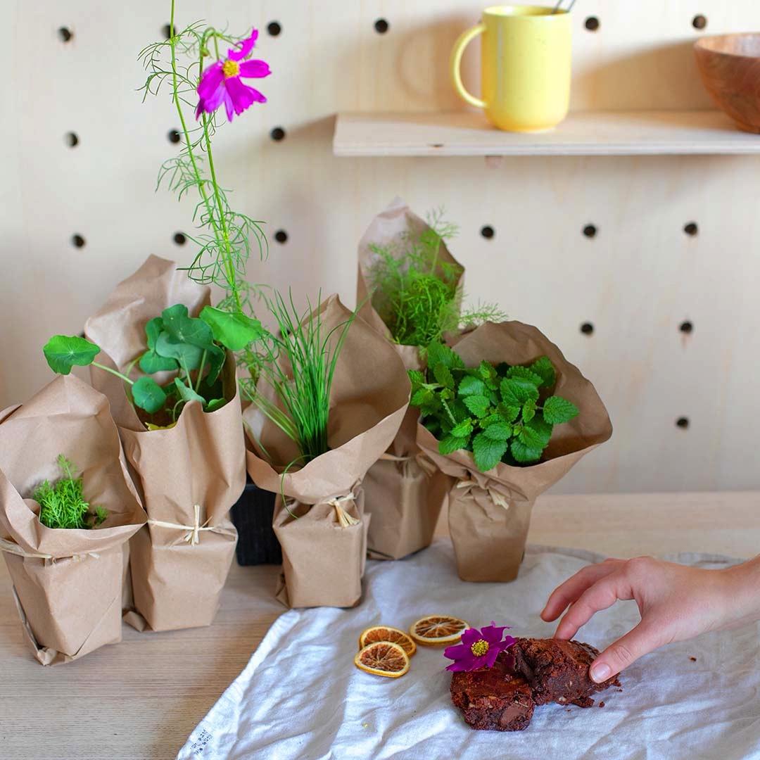 6 plantes comestibles pour fleurir vos plats