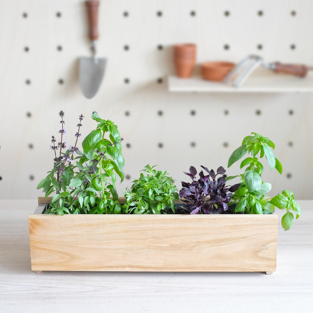 Notre jardinière 100% Basilic