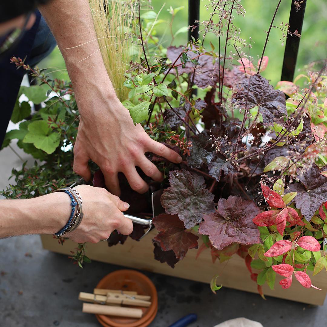 Guide de plantation pour jardinière