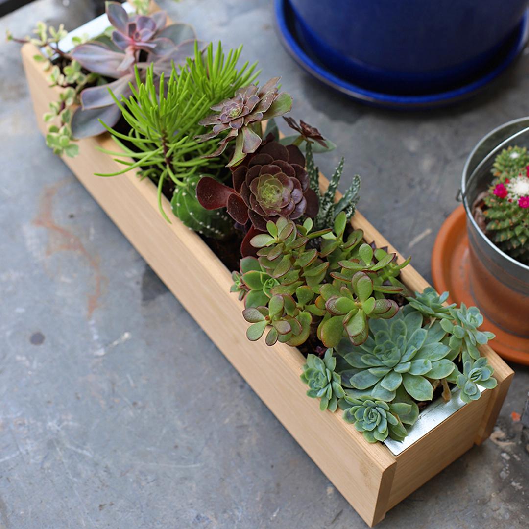 Petit guide d'entretien pour jardinière d'intérieur