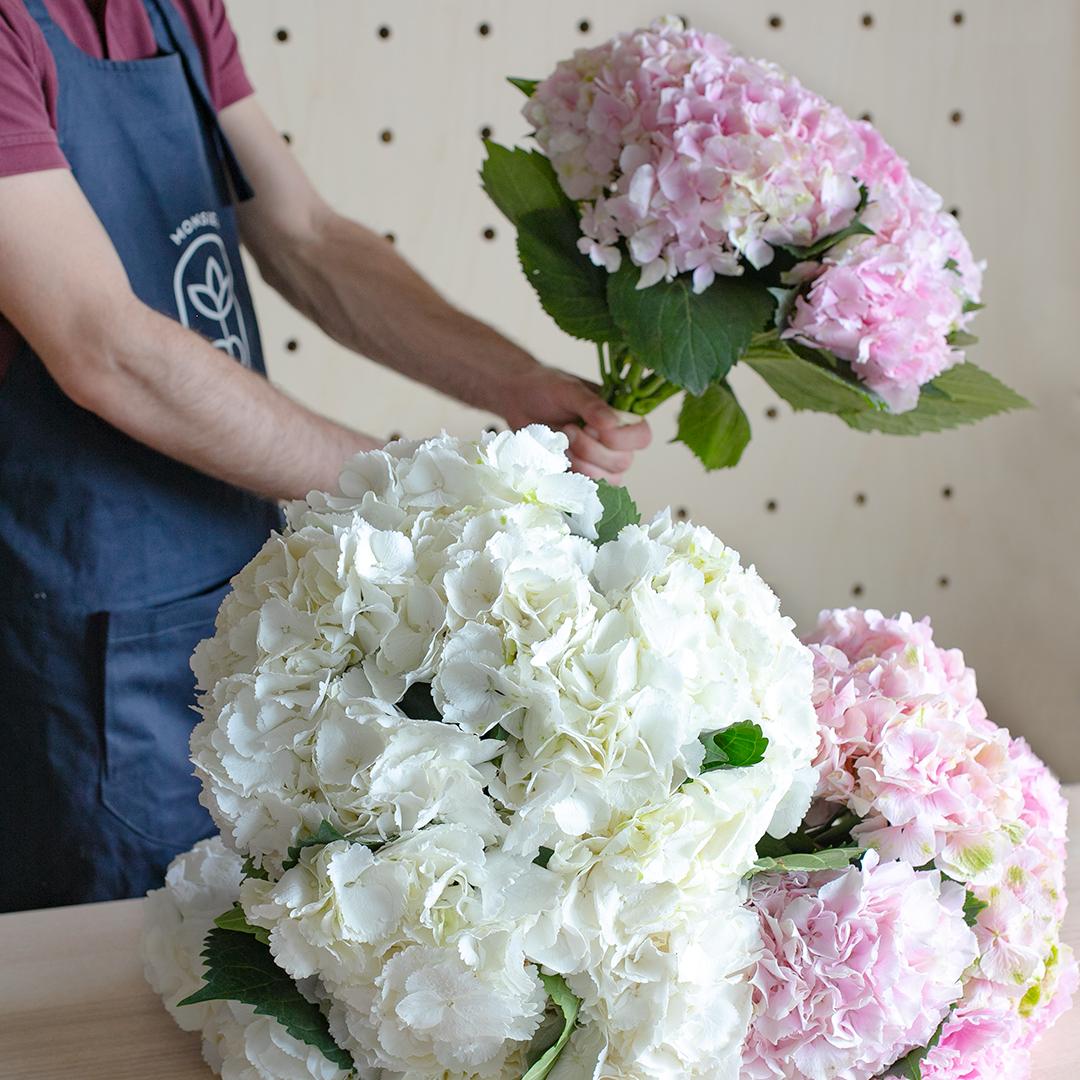 Entretien des Hortensias en vase