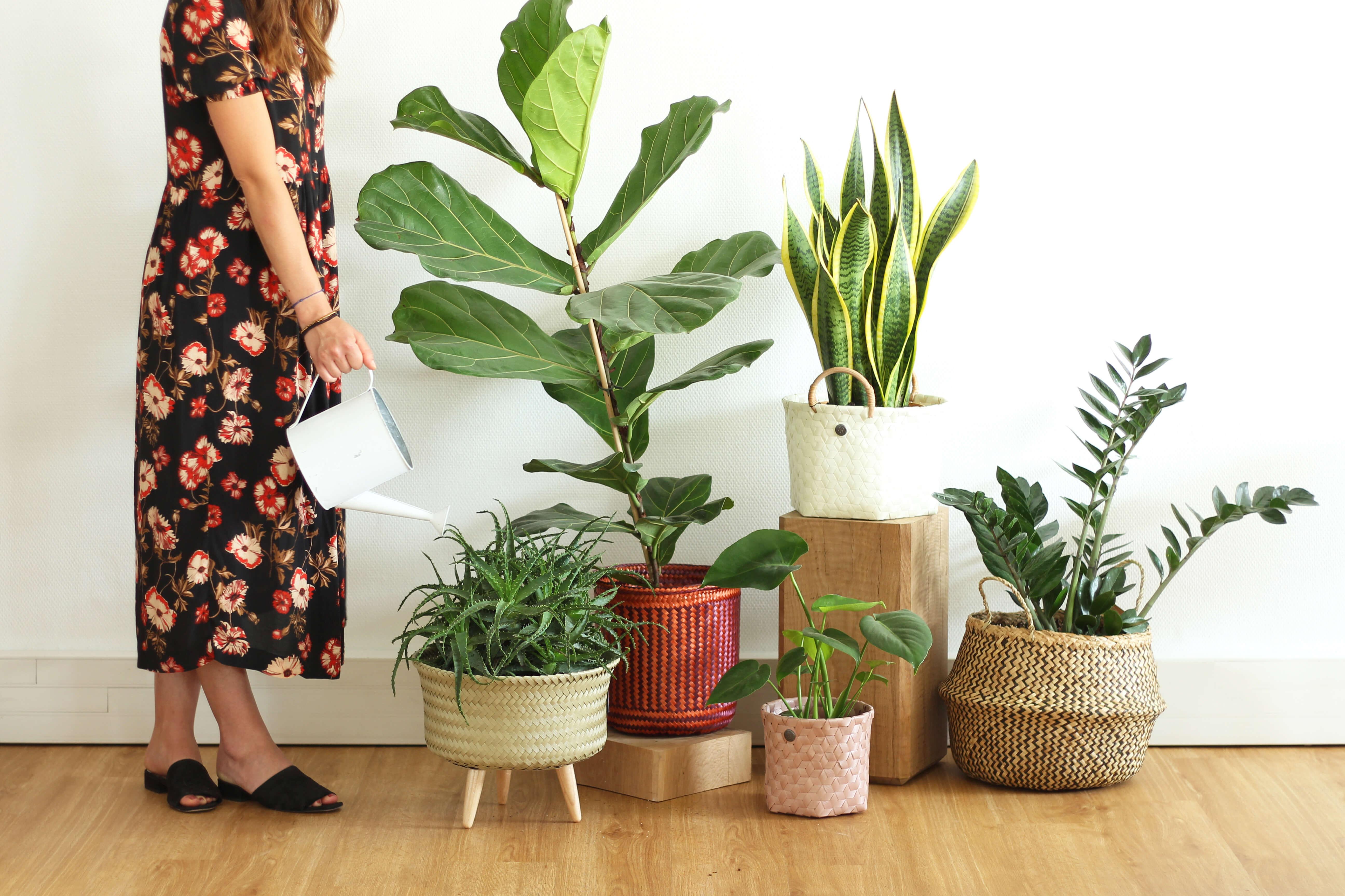 Prendre soin de ses plantes en vacances : guide de survie
