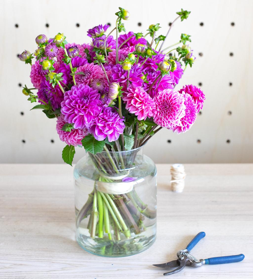 Comment prendre soin de ses Dahlias en vase ?