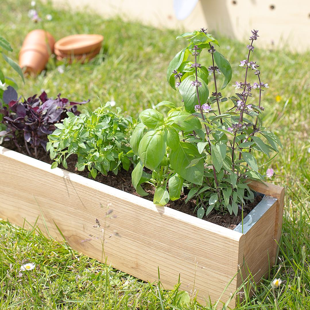 Comment récolter ses herbes aromatiques ?