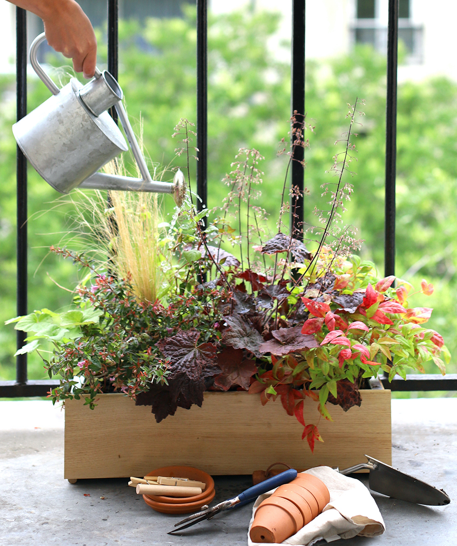 Comment prendre soin de ses plantes l'été ?