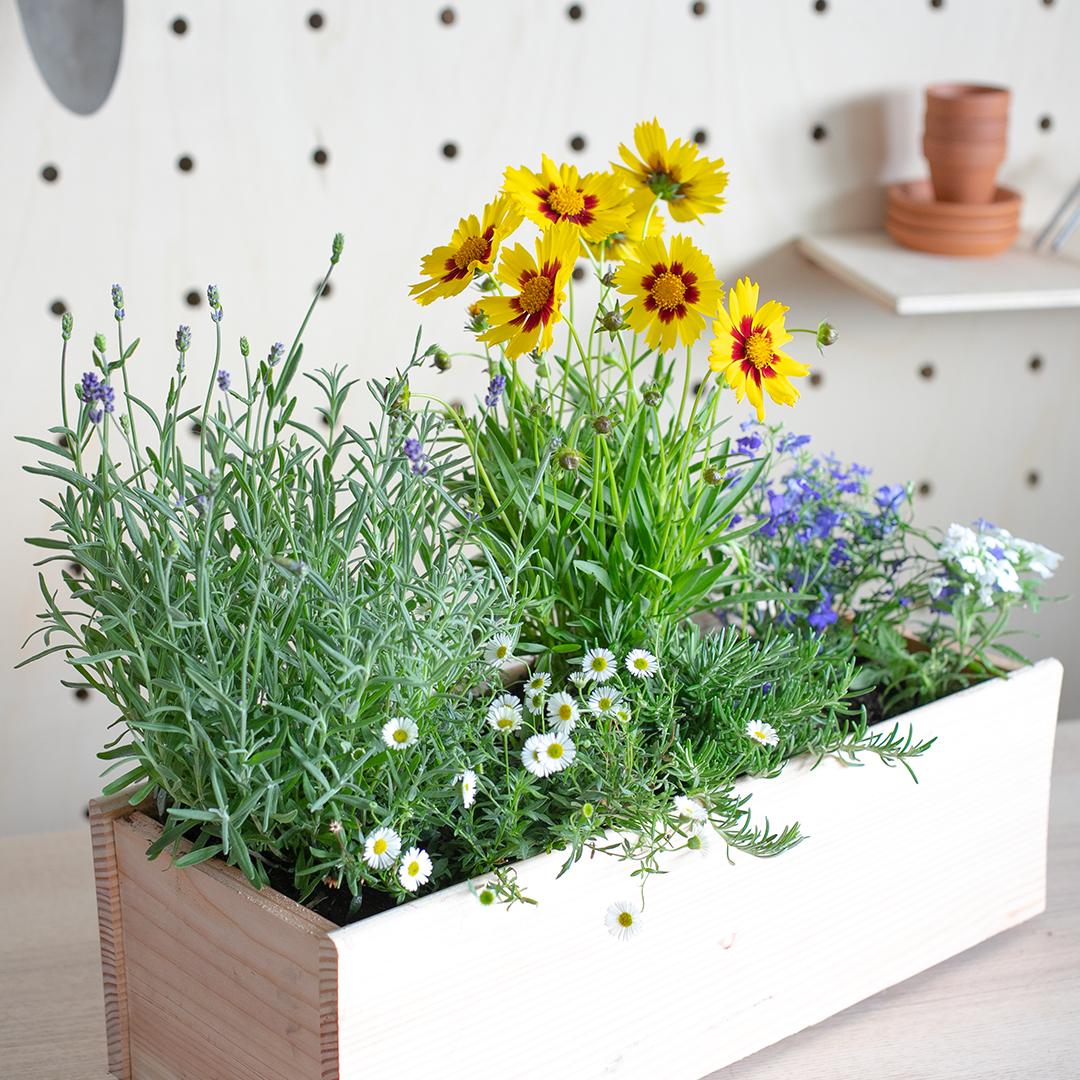 Notre jardinière de plantes mellifères