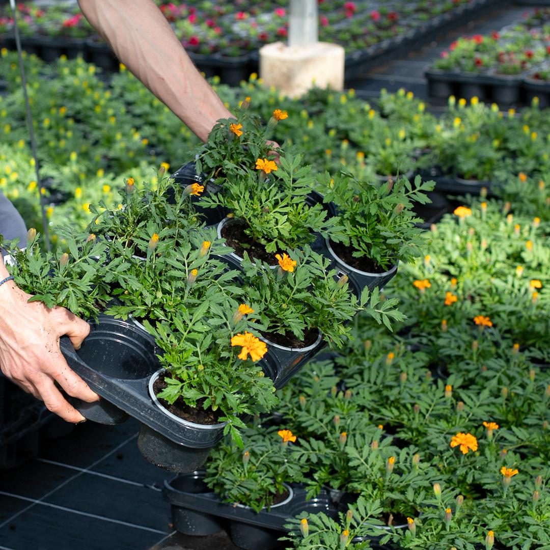 Quelles plantes privilégier pour une exposition plein soleil ?