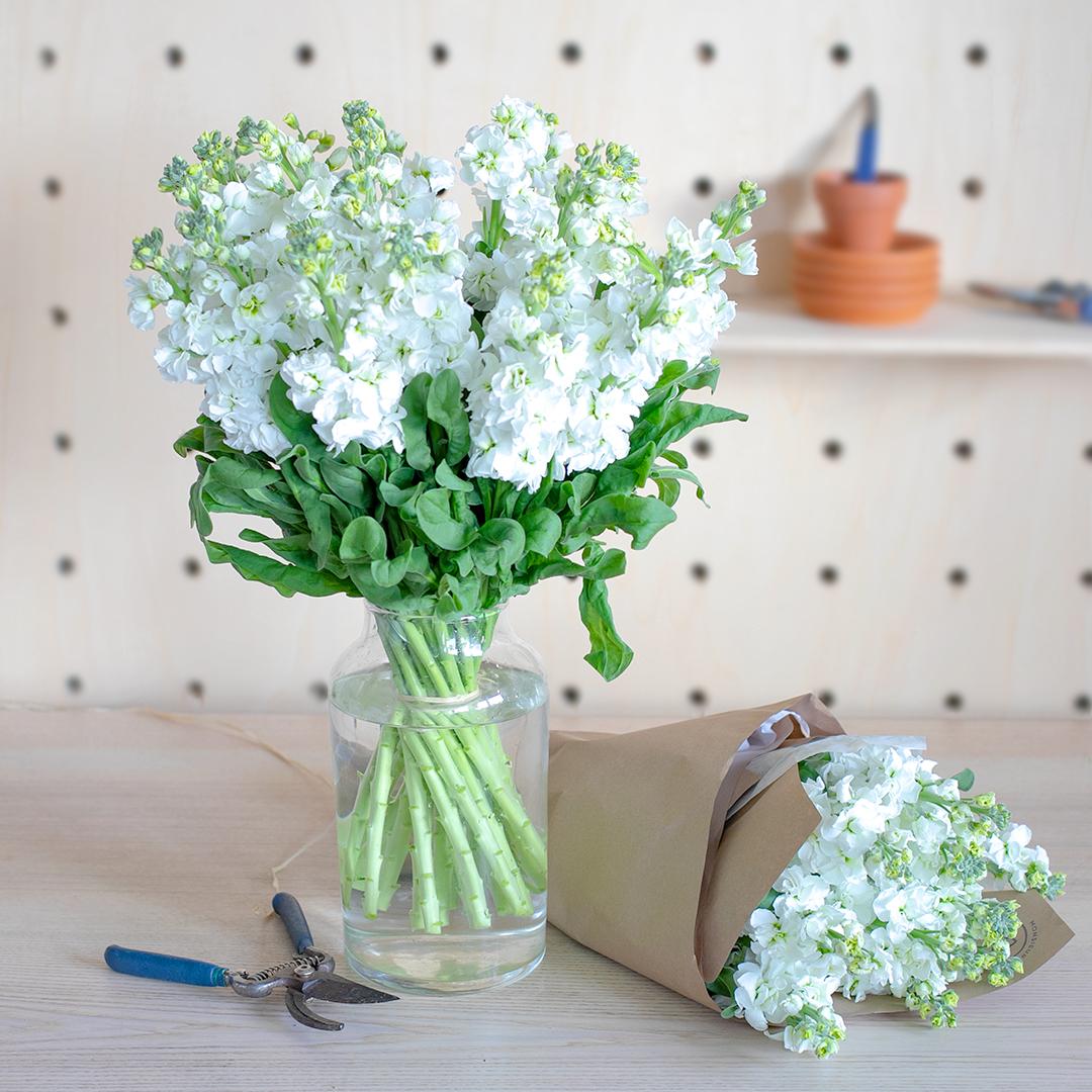 Comment prendre soin de ses Giroflées en vase ?