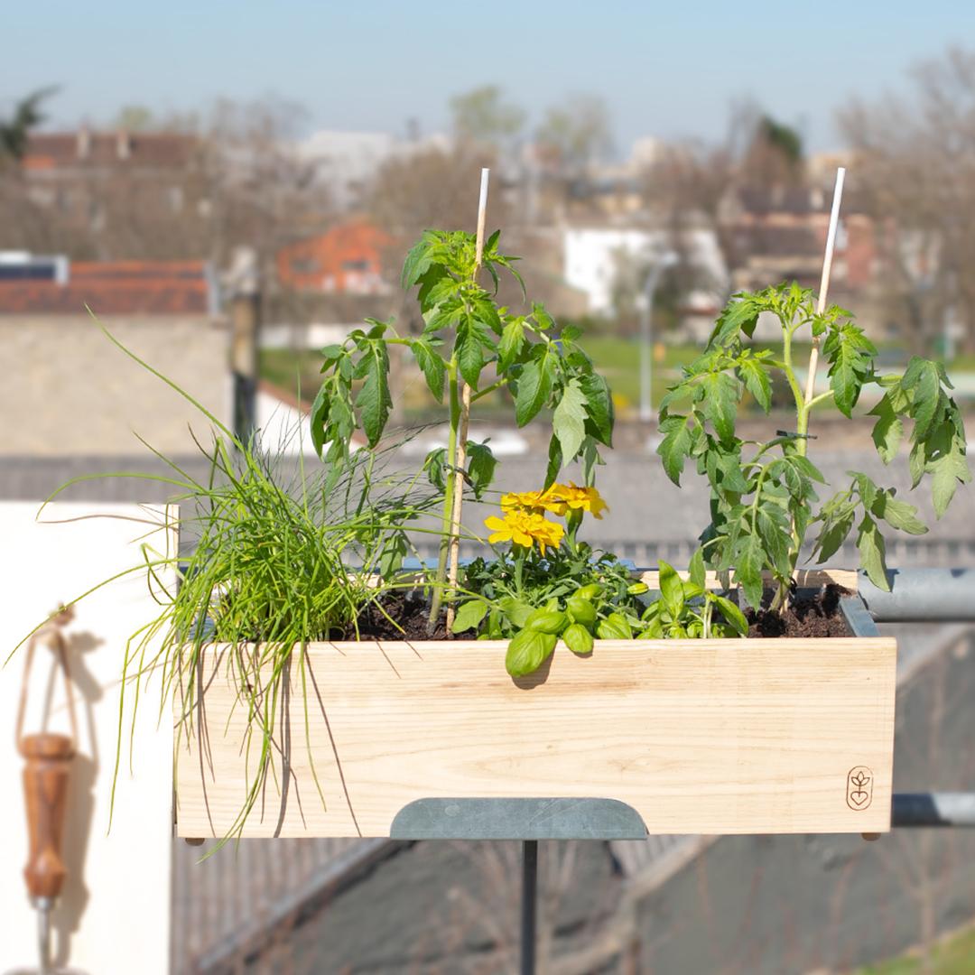 5 plantes pour lutter contre les nuisibles