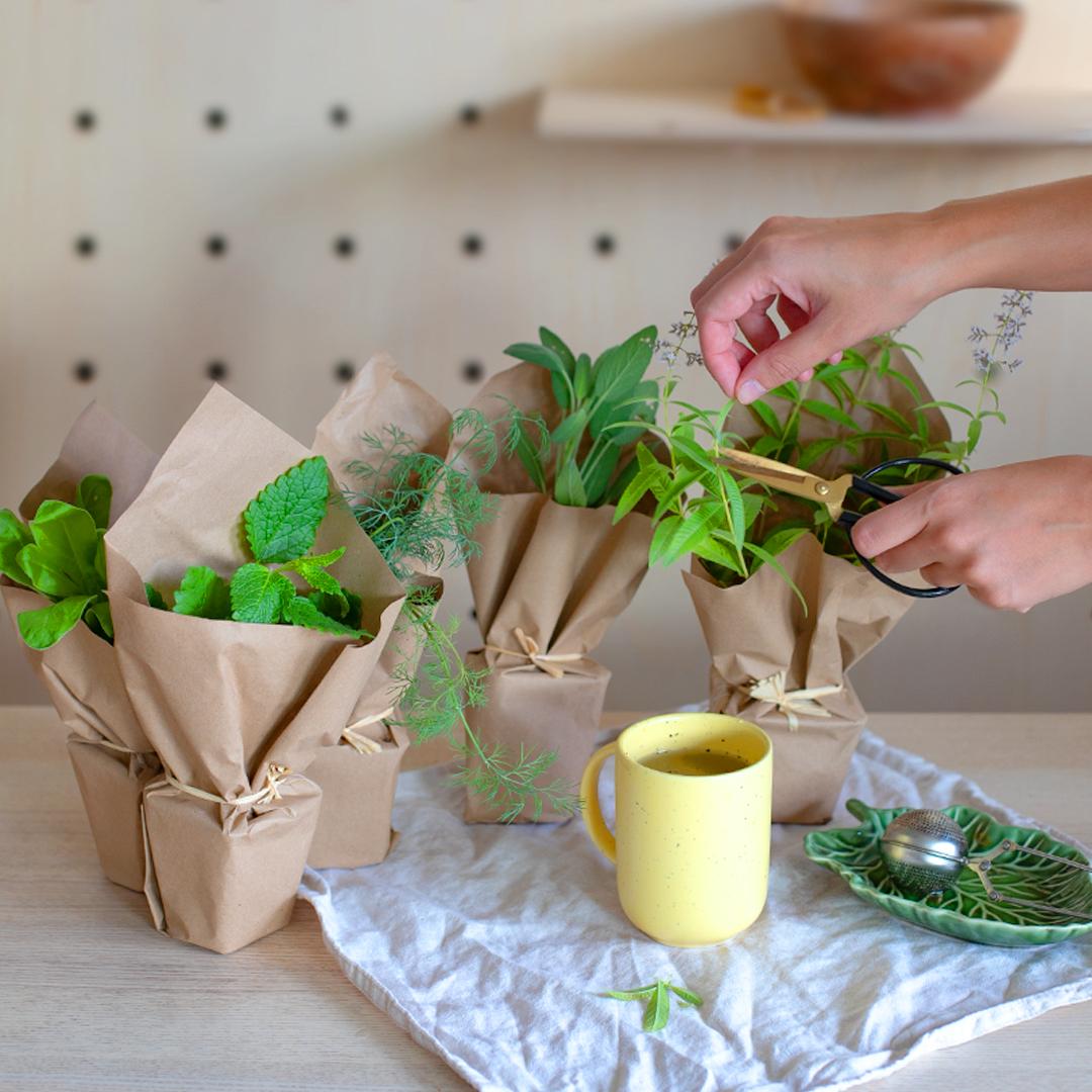 6 plantes à infuser et leurs bienfaits