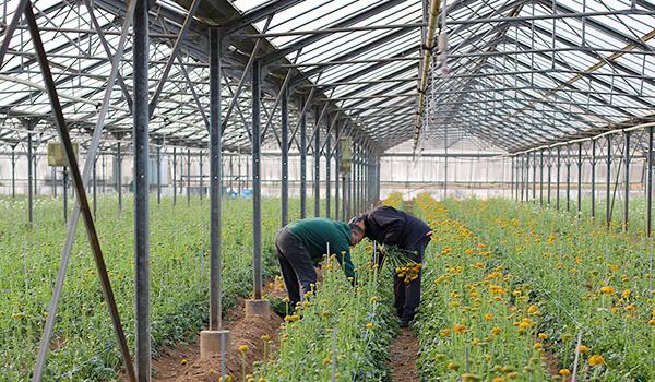 Des engagements au service de la Nature et des Horticulteurs