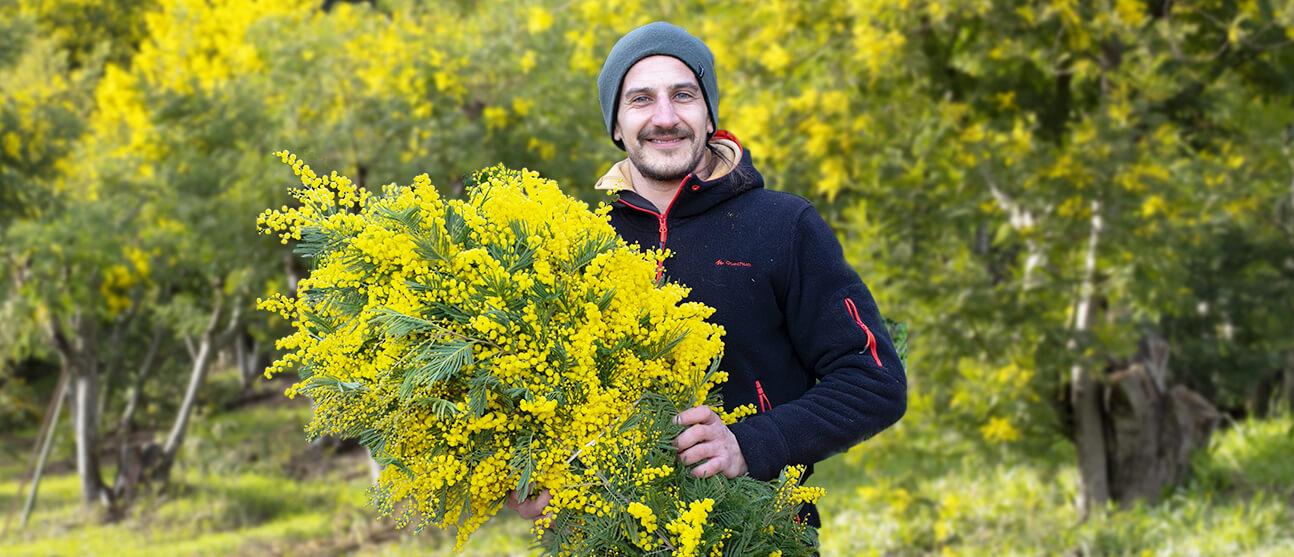 Alex, producteur de Mimosa