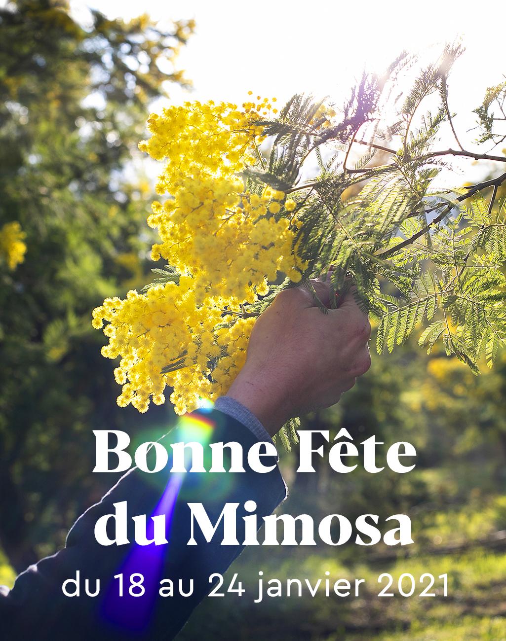 Fête du mimosa